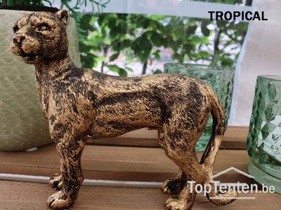 Luipaard Gold